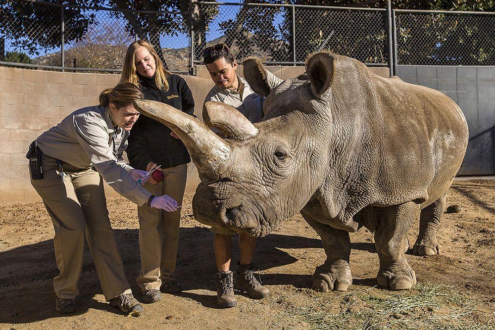 10 Unbelievable Biggest Animals In The World Big Animals