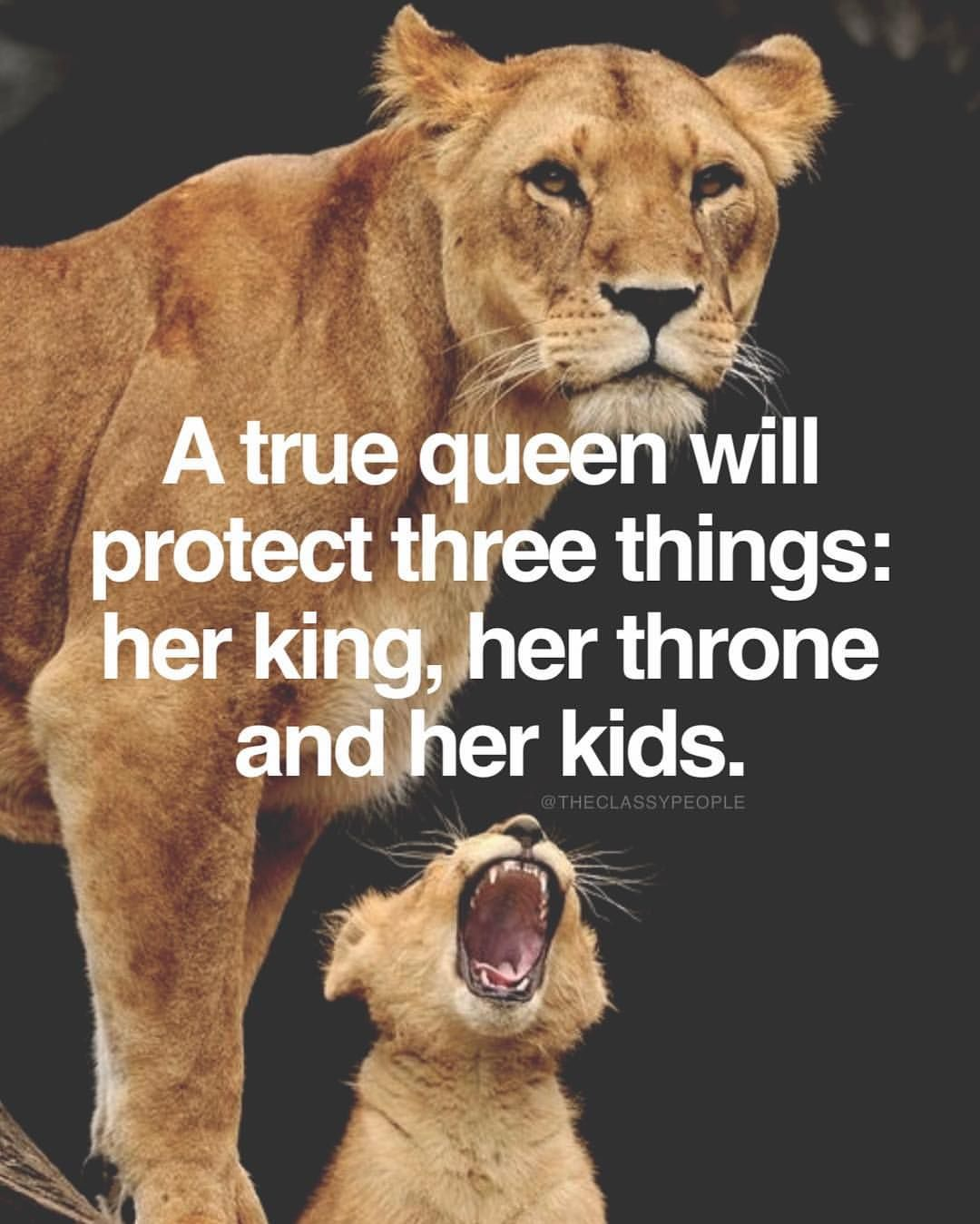 Tag your Queen #TheClassyPeople | Lion quotes, Lioness ...