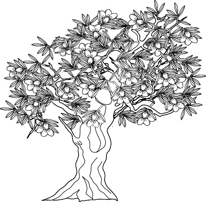 olivo dibujo | Get craftsy, show your love | Dibujos