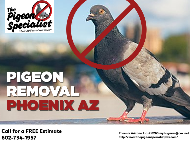 Pigeon Removal in Phoenix Az in 2020 Pigeon removal, How