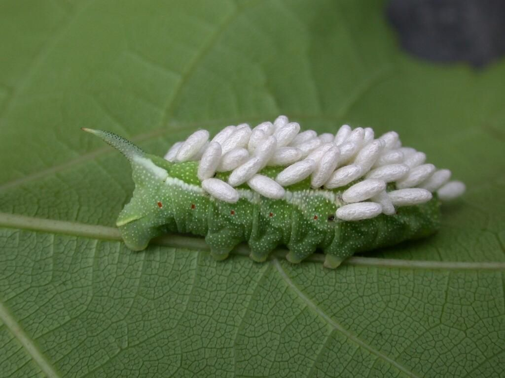 Controlling pests in the organic garden garden pests