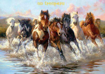Le troupeau de chevaux sauvages wild horses pinterest - Dessin de chevaux sauvage ...