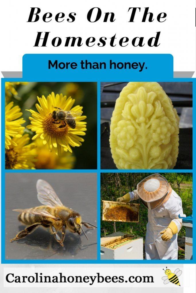 Benefits of Beekeeping In Your Backyard | Bee keeping ...