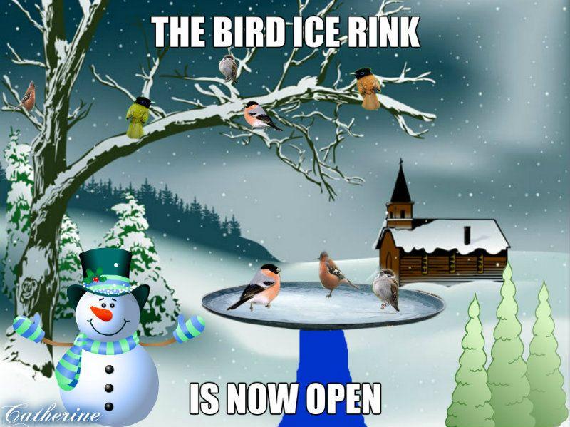 Bird Ice Rink