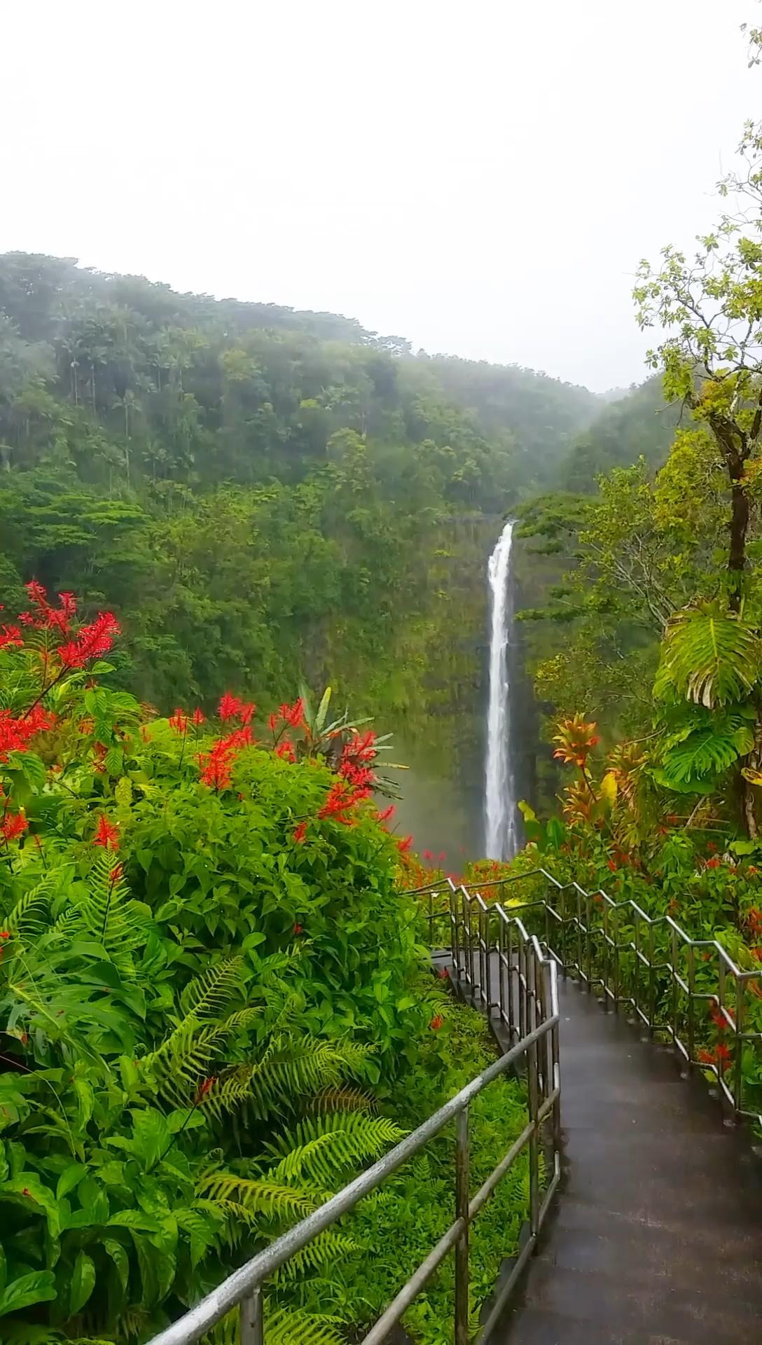 Akaka Falls loop trail in Hawaii