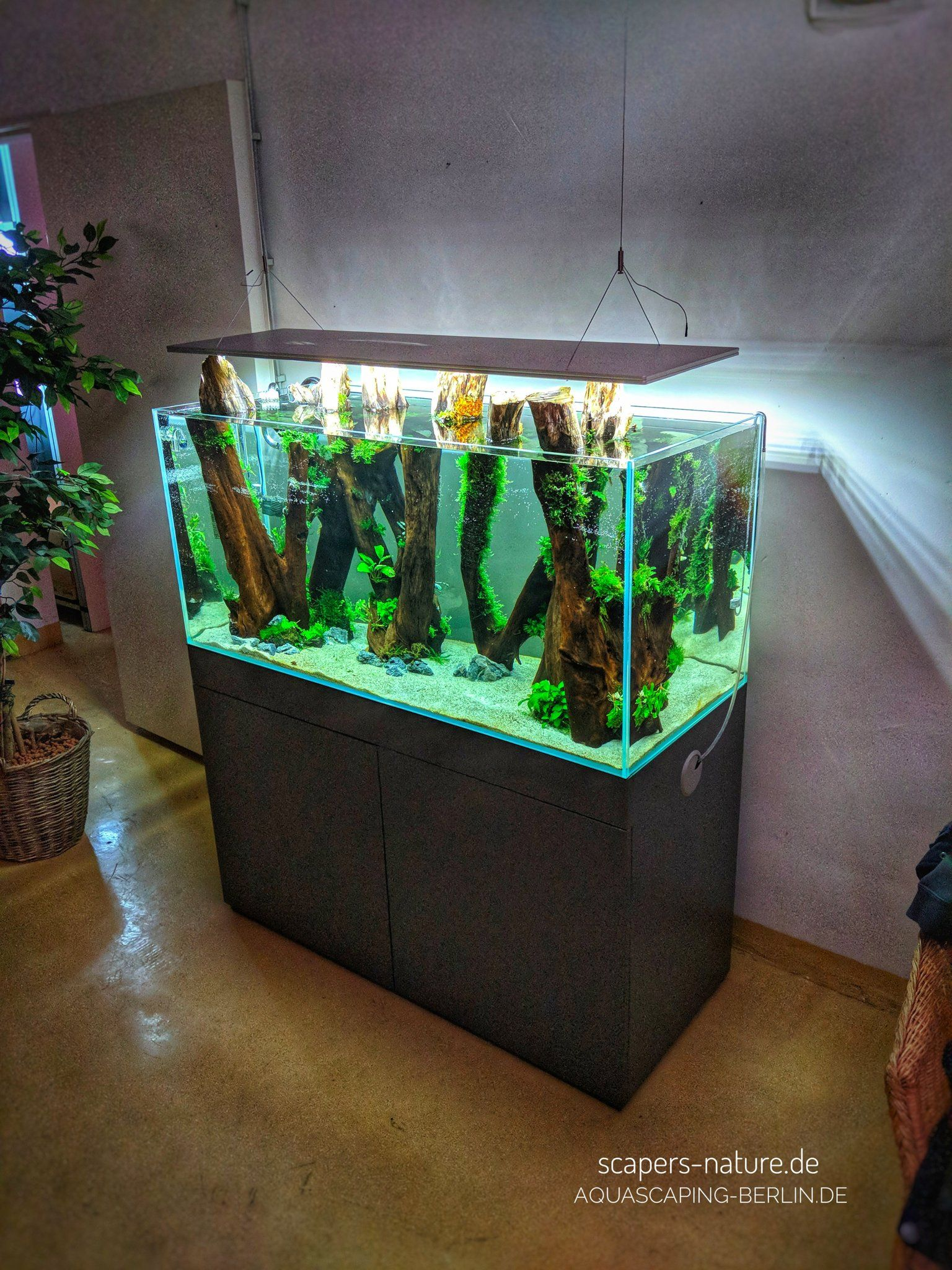Diy Terrarium Stand Pin By Jittendra On Aquatic Tank Ideas Aquarium