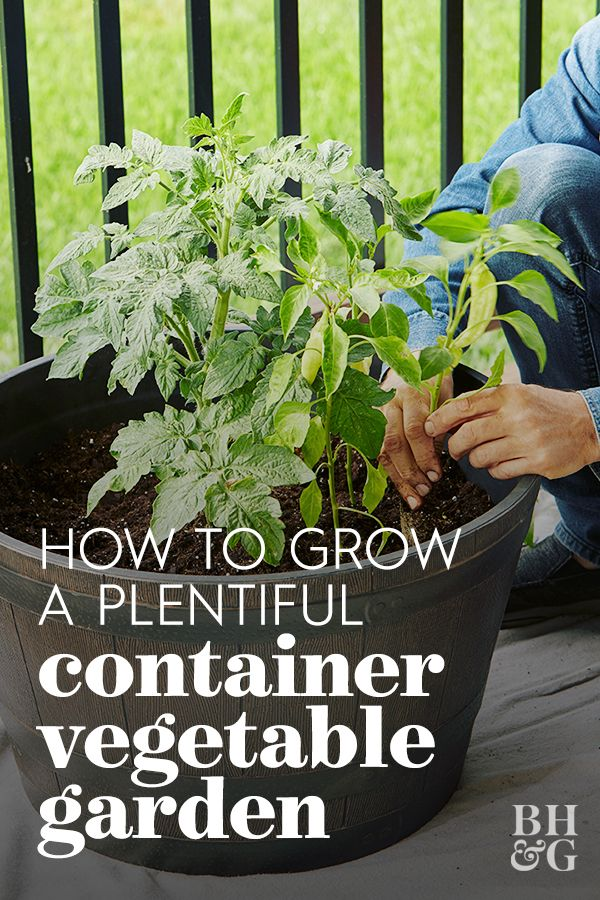 Go Beyond Borders and Grow Vegetables in Containers is part of Container gardening vegetables, Growing vegetables, Vegetable garden planner, Growing vegetables in containers, Easy vegetables to grow, Backyard vegetable gardens - Littleknown secret Some vegetables actually grow really well in pots!