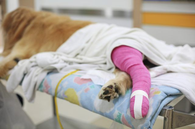 ACL Surgery for Dogs Dog insurance, Cheap pet insurance