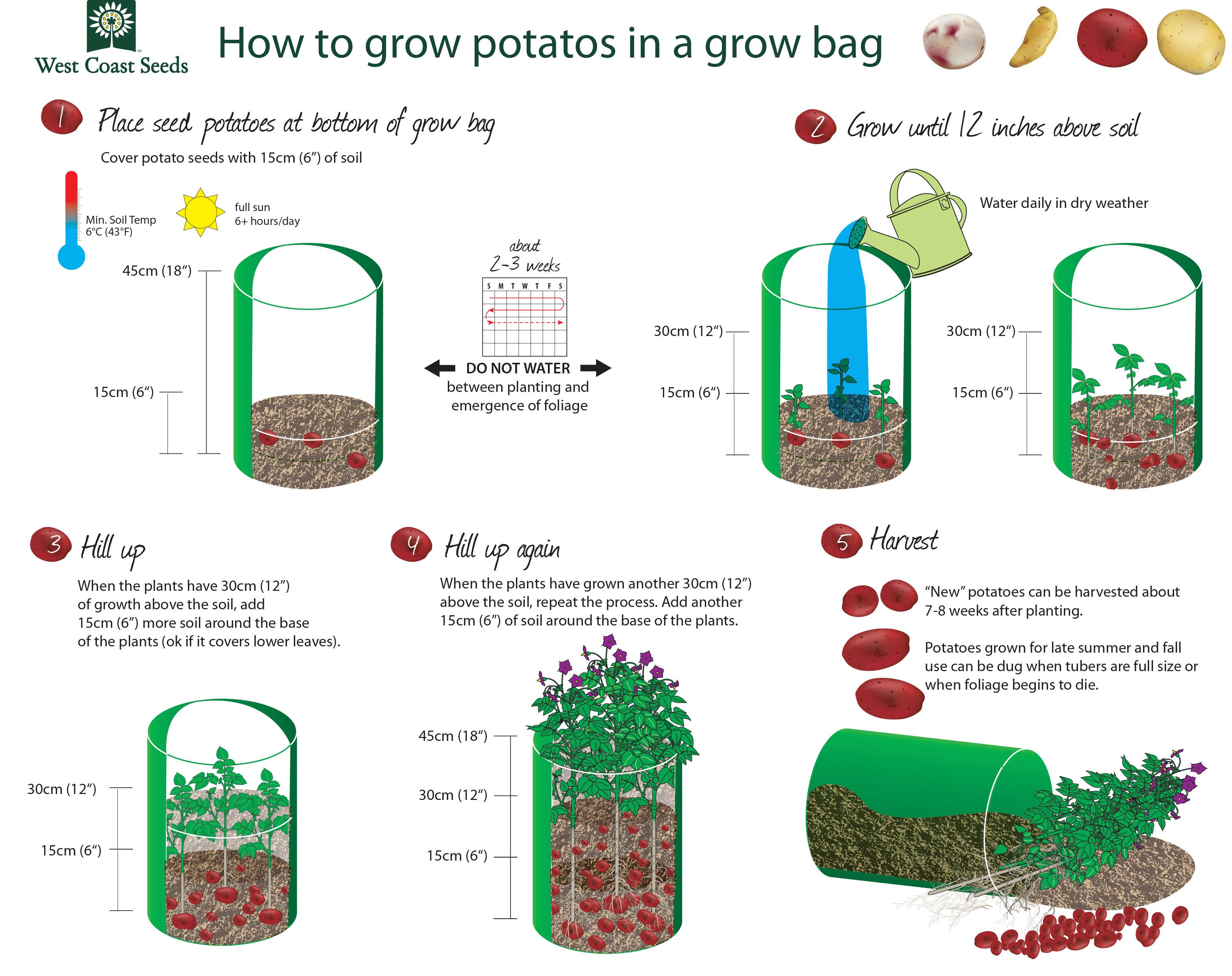 How to plant potatoes 33