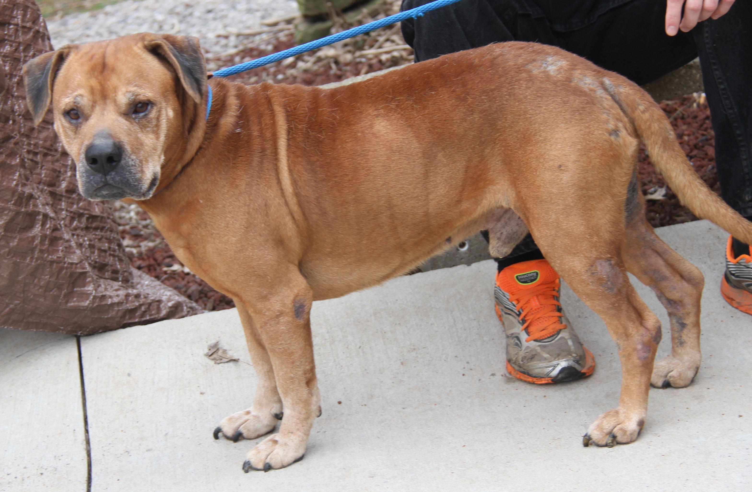 Adopt Brutus Neutered On Dog Adoption
