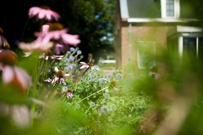 Buytengewoon kindvriendelijke tuinen plantrijke villatuin
