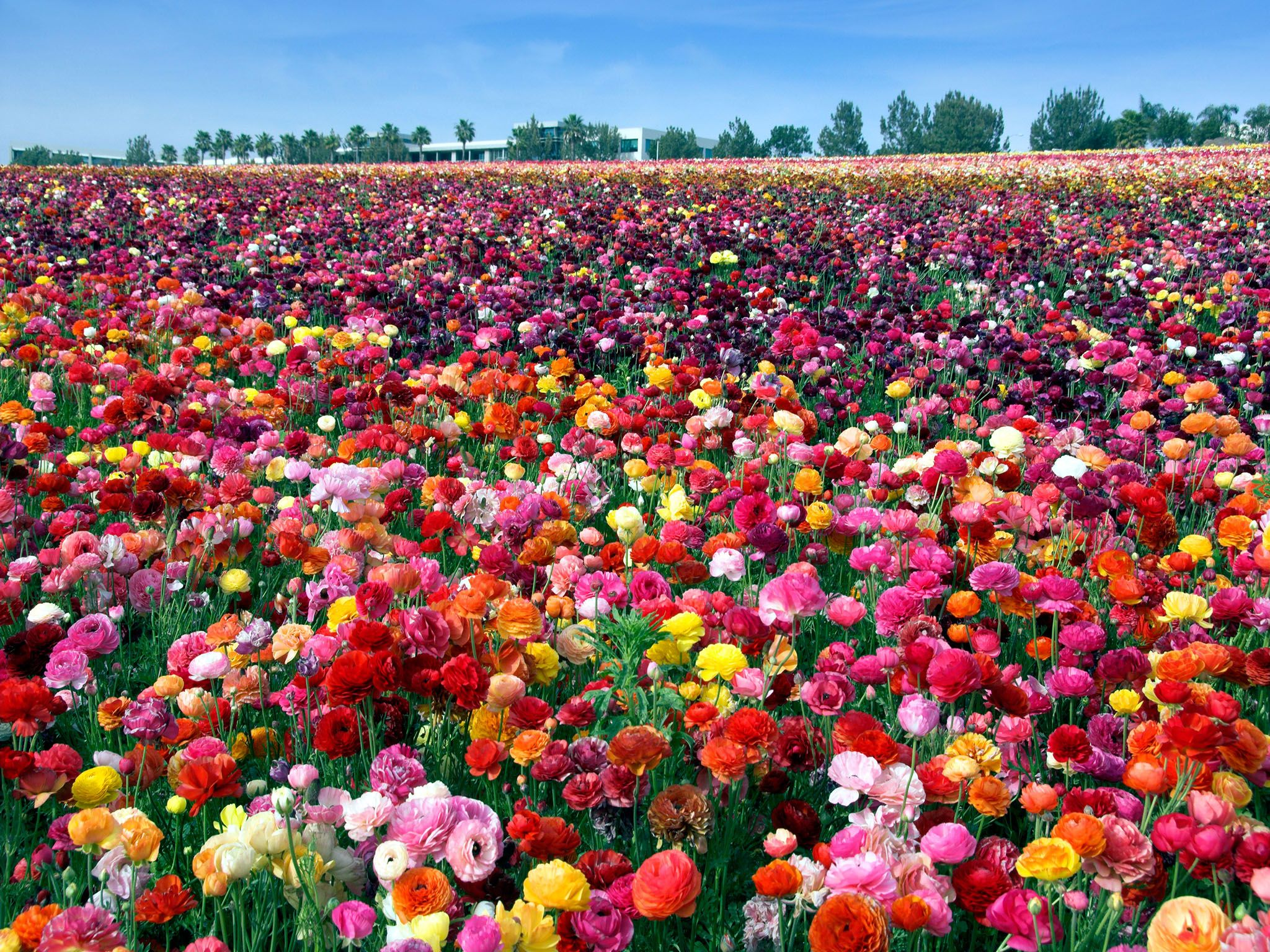 8 Places To See Americas Most Beautiful Spring Flowers Beautiful
