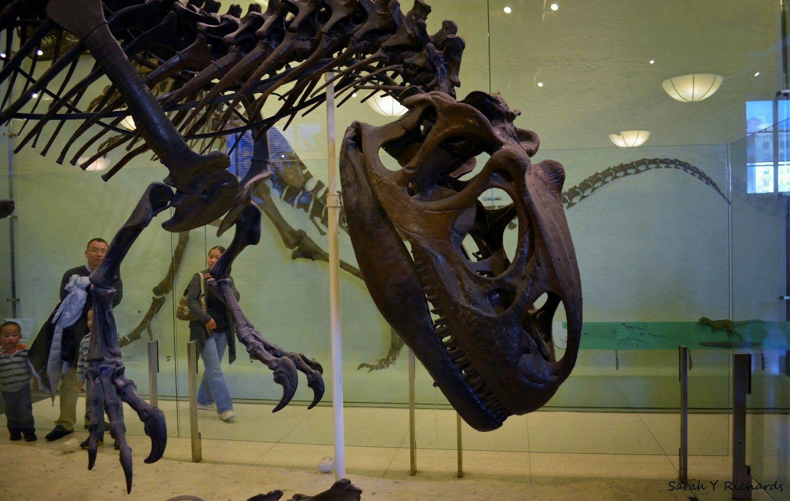 Descubre Cómo Entrar Gratis Al Museoamericanodehistorianacional Amnh Museo Museum Nyc Nuevayork Manhat Museo Americano De Historia Natural Museos Arte