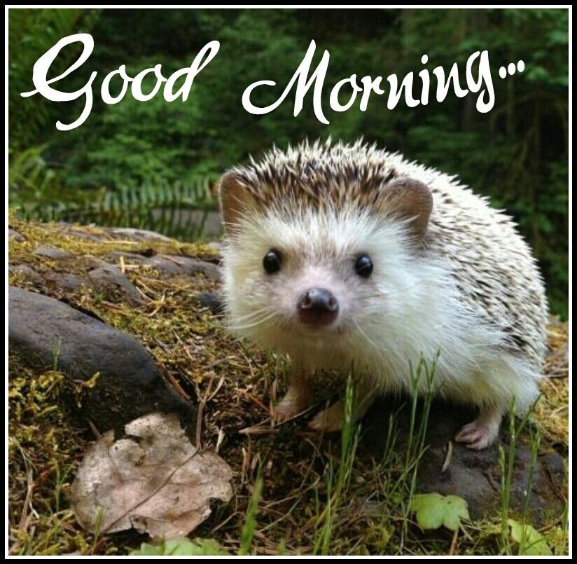 10+ Good morning cute animals images