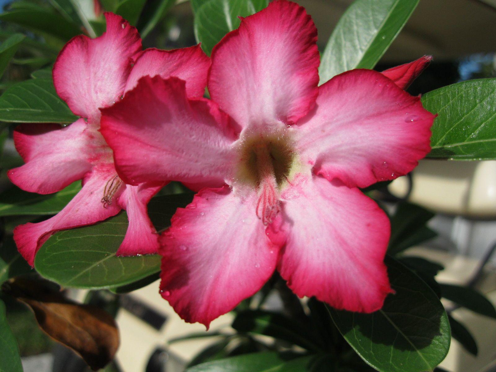 desert flower names name that plant win that plant xiv answer