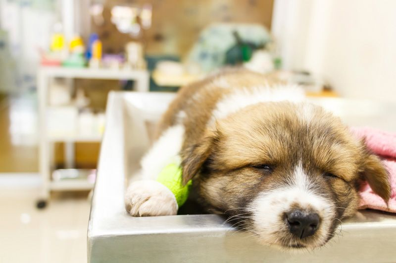 Bringing a new puppy into your home is an exciting time, but he's not as tough as you think. Read on to find out more about common puppy illnesses.