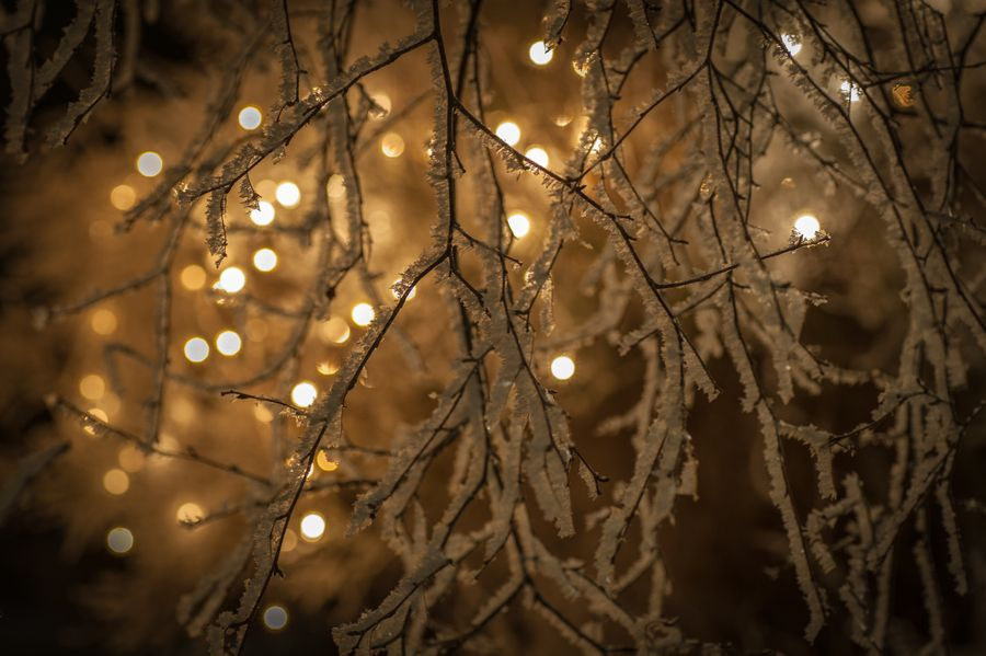 Frosty branches by Thomas Lindholm