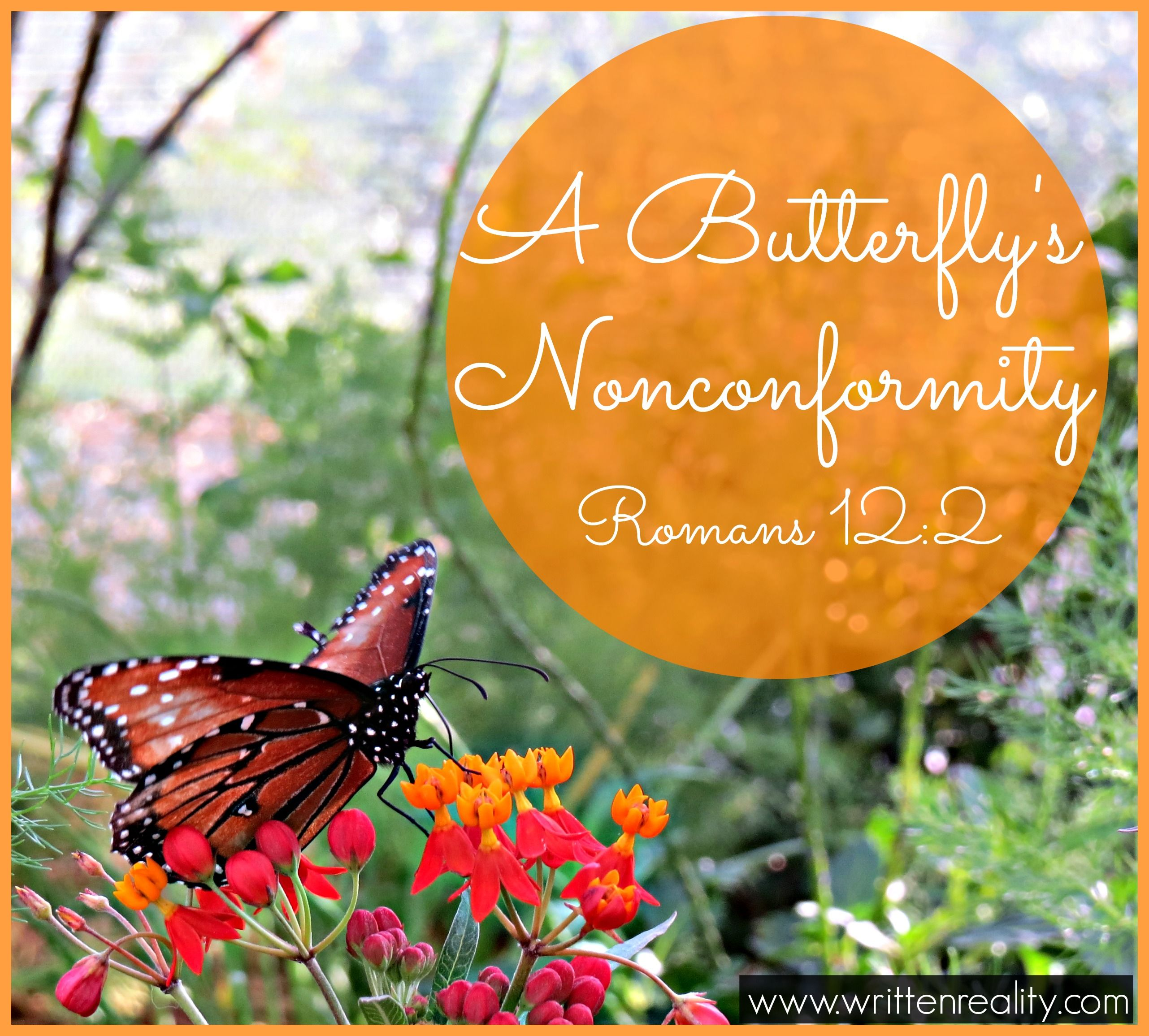 Peer Pressure Quotes A Butterfly's Nonconformity  Peer Pressure And Bible