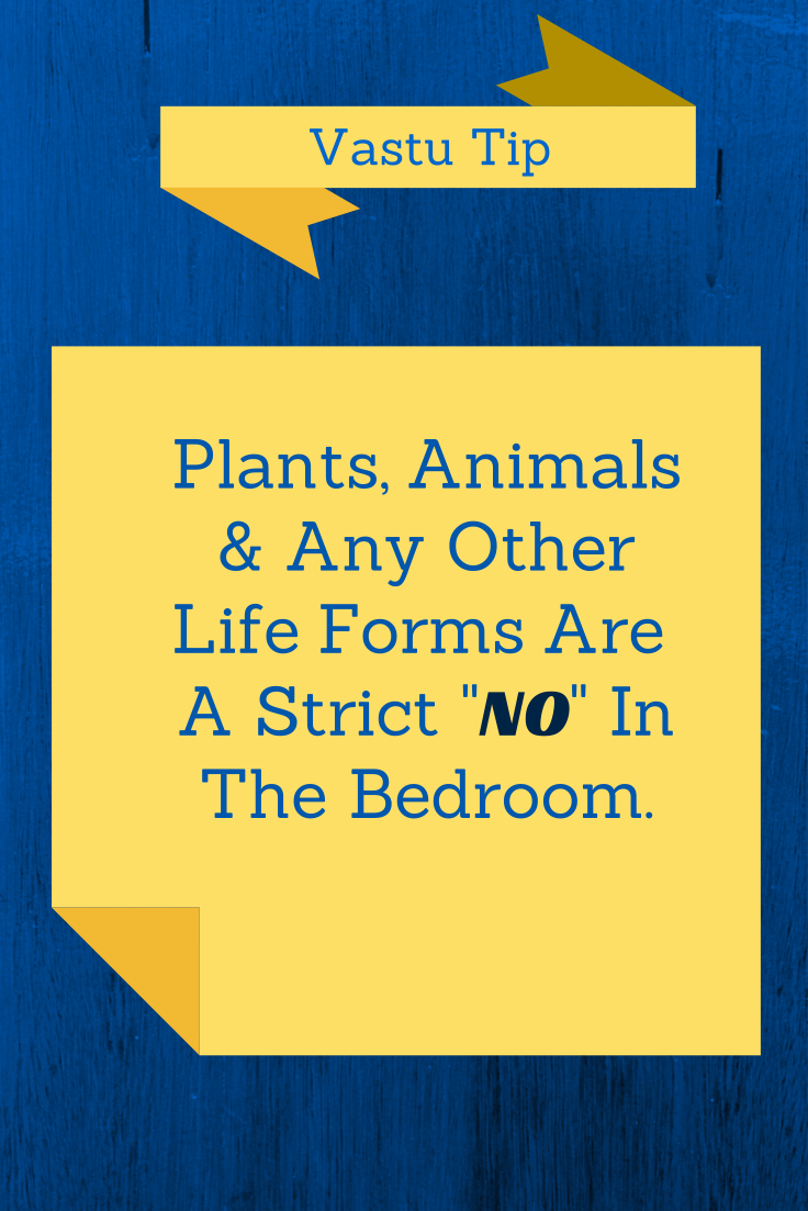 Vastu Shastra Tip For Bedroom Never Allow Plants Or Animals In