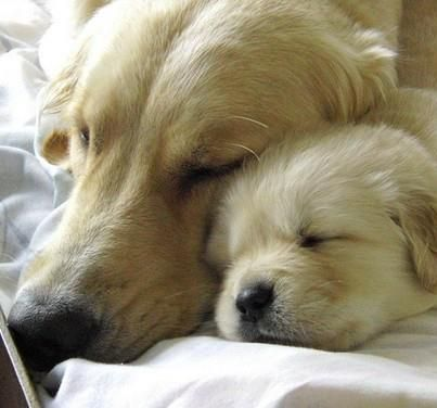 Pin By Sarah Mishler On Pets Puppies Pets Cute Animals