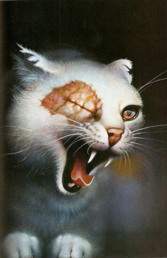 Brightheart yawning...not scary Warrior cats, Warrior