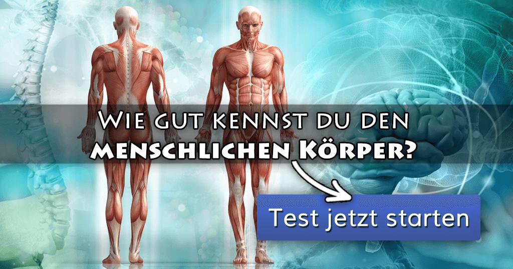 Wissensquiz: Wie gut kennst du den menschlichen Körper? Wie viele ...