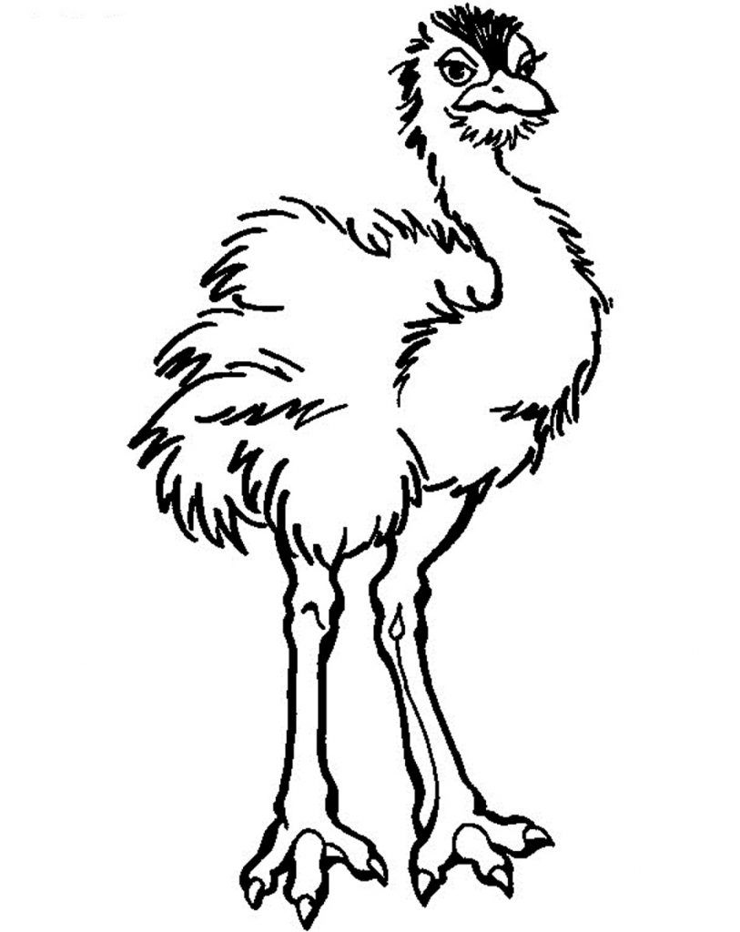 baby ostrich coloring page animal coloring pages pinterest