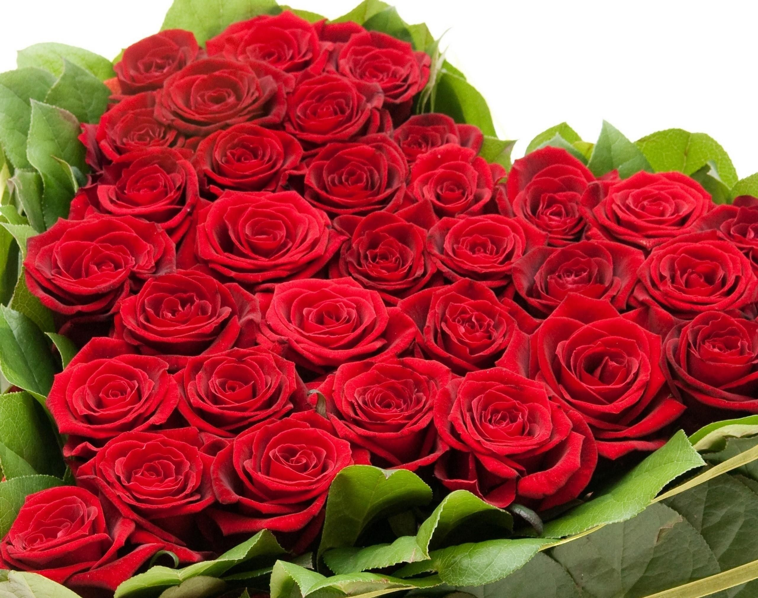 Flowers Images Roses For Free Download 5 Mobile Wallpapers