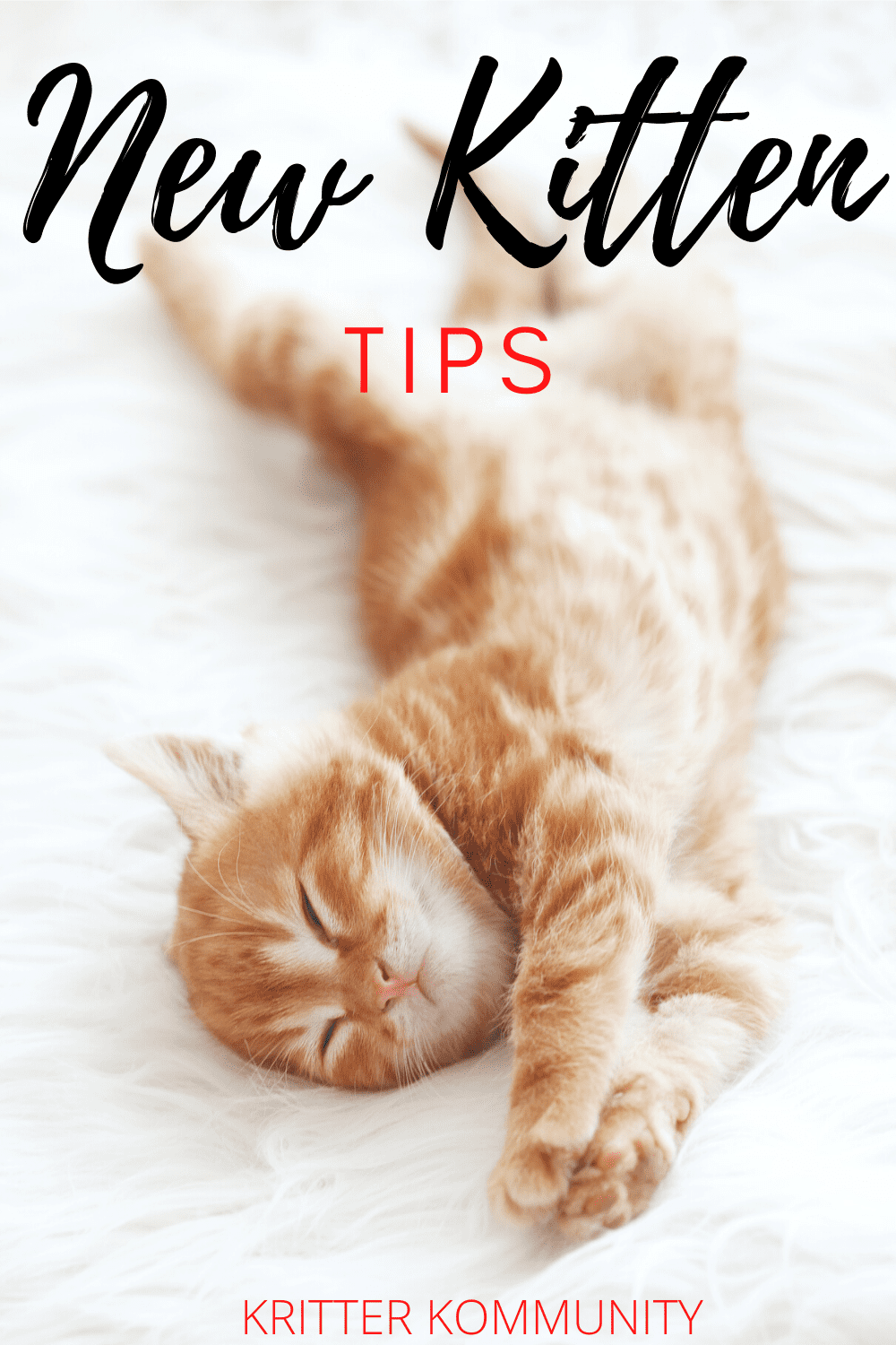 Important Ways To Prepare Your Home For A New Kitten Kritter Kommunity In 2020 Sleeping Kitten Kitten Care Kitten