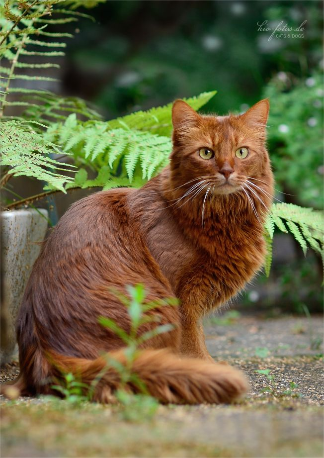 Redclaw-a dark ginger tom with amber eyes.Is kind and Handsome.Has a crush on Snowstripe.Loves to hunt and is a good fighter.