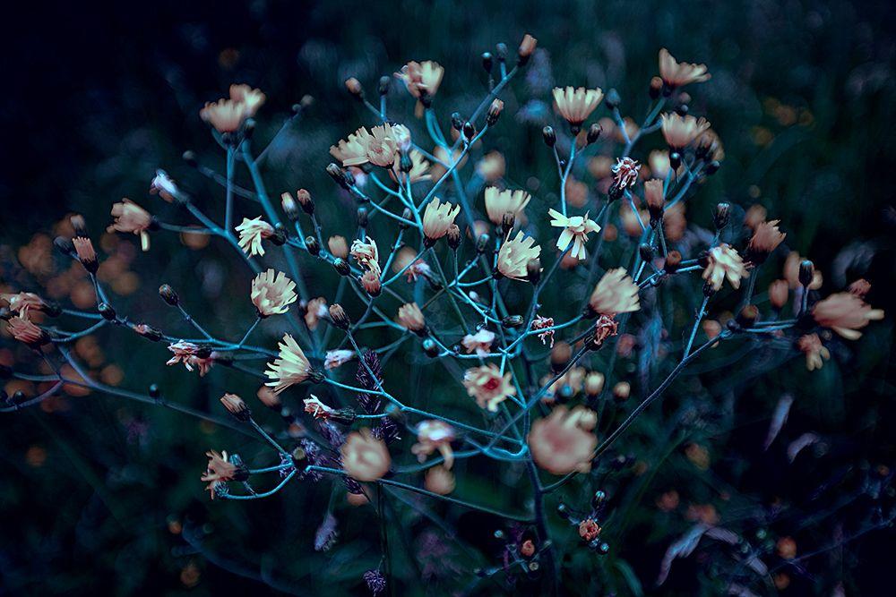 friday's flower power |