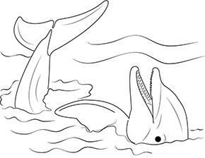Ausmalbild Delfin Ruht Sich Aus Ausmalen Ausdrucken Ausmalbild
