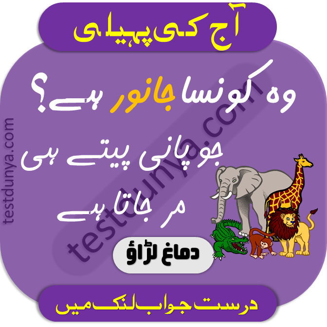 Riddles in Urdu for Kids with Answers in 2020 Riddles