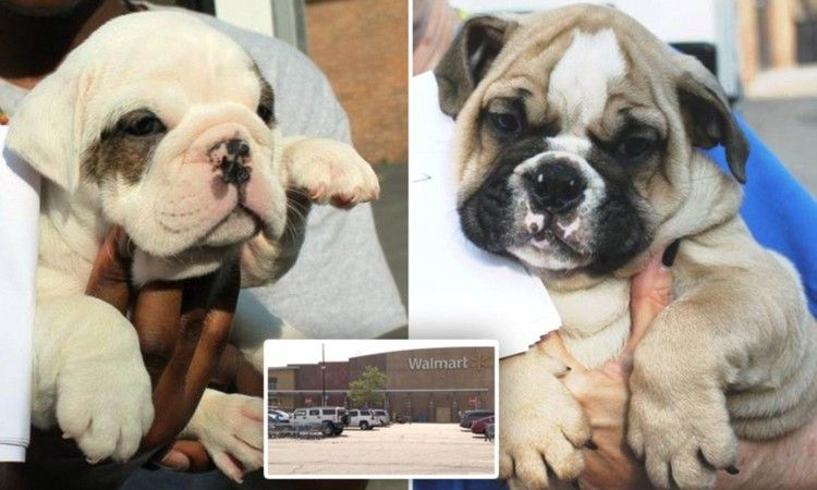 Dozens of dehydrated puppies found crammed in van daily