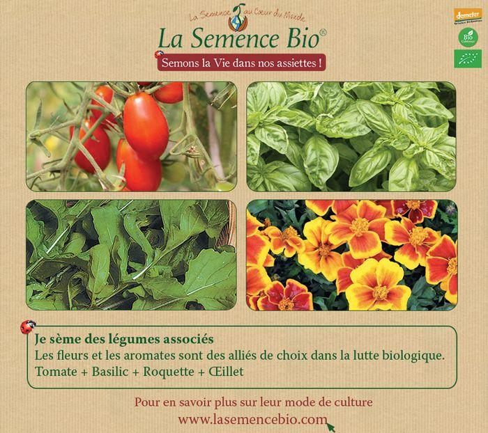 Au potager, semez des fleurs et des aromates à cotés des