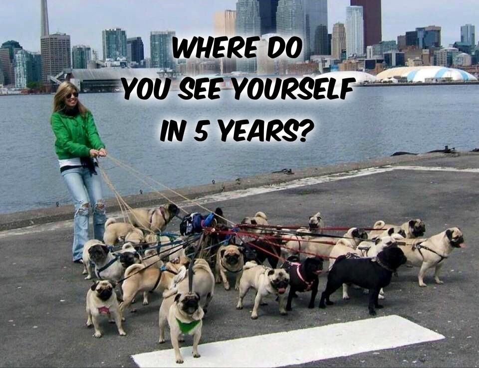 What Is Positive Reinforcement Pugs Funny Pug Memes Pug Quotes