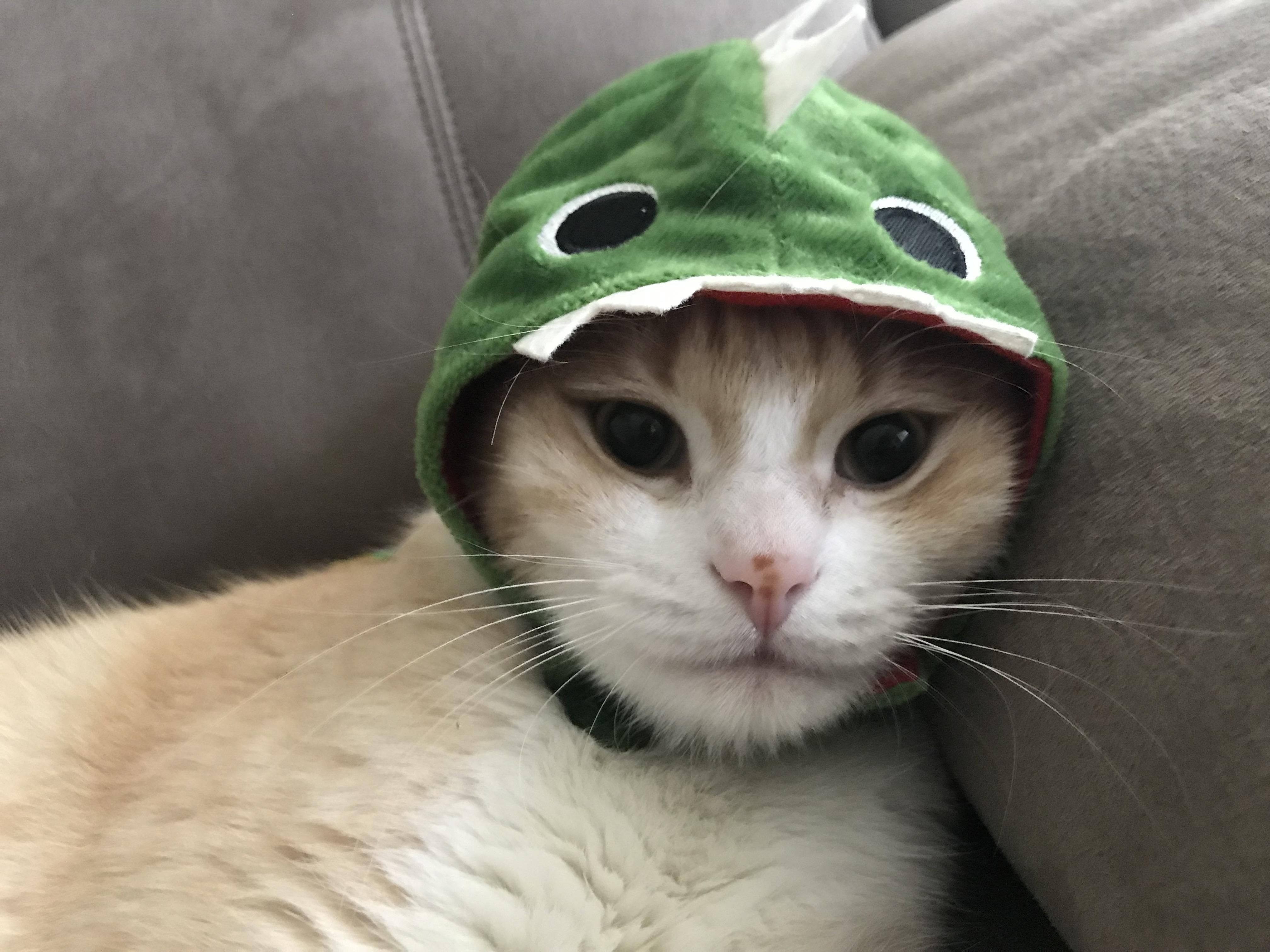 Bought him a dinosaur hat a few weeks ago here he is