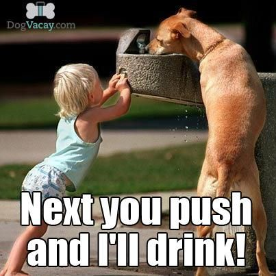 Team Work Dog Water Toddler Kid Funny Dog Memes Dogs And Kids Funny Dogs