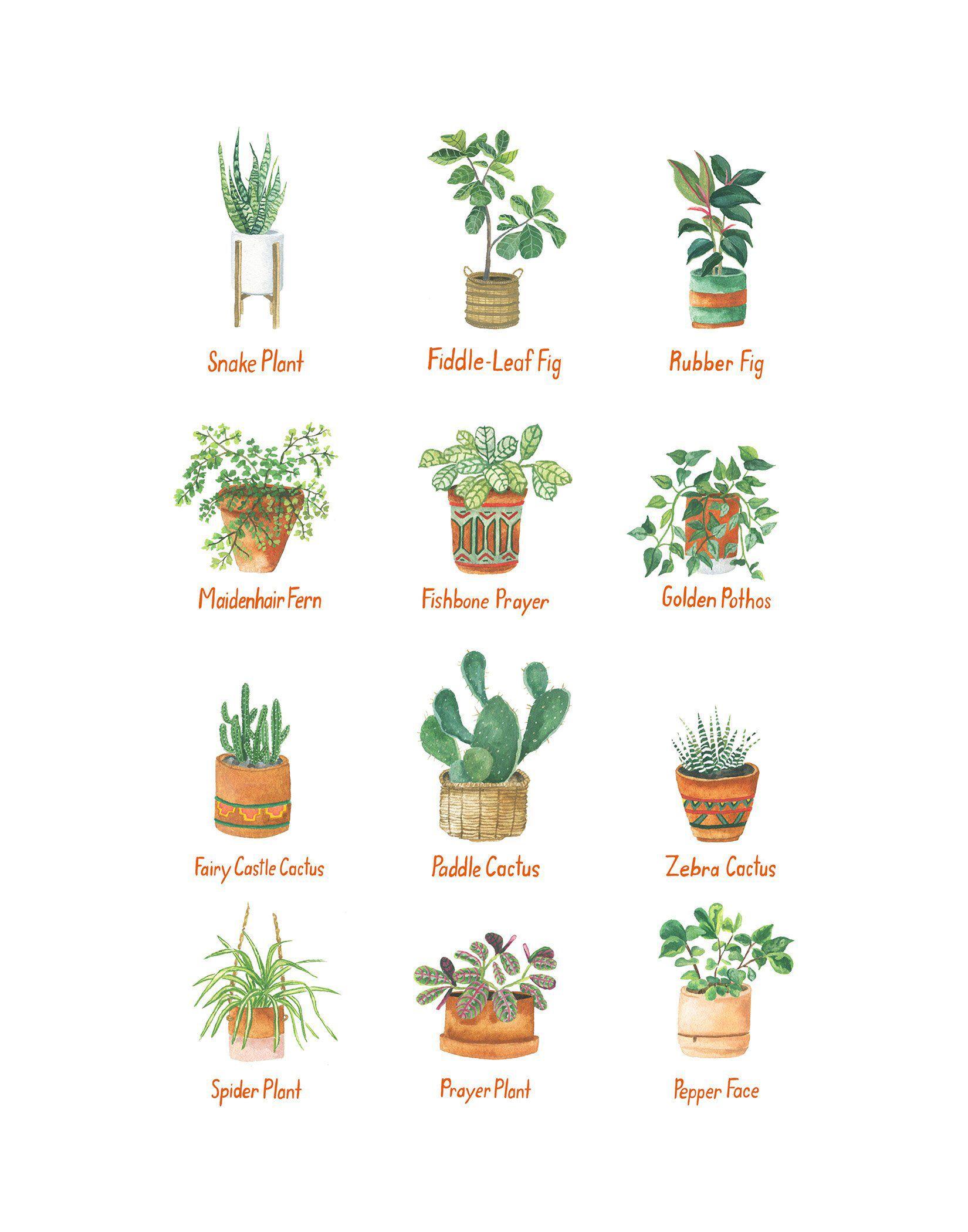 House Plants 11x14 Print Etsy Plants, House plants
