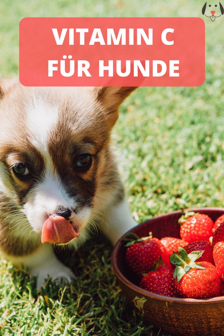 Pin Auf Hunde Nahrung