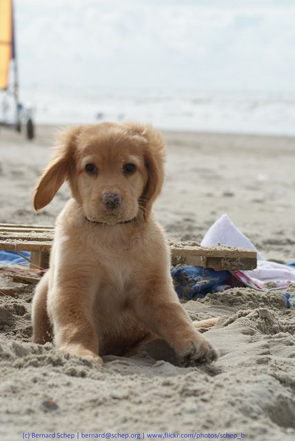 Sandy Nose: Puppy's first time on the beach