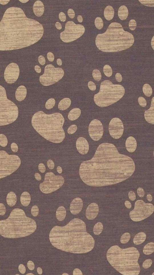 Little Paws Wallpaper