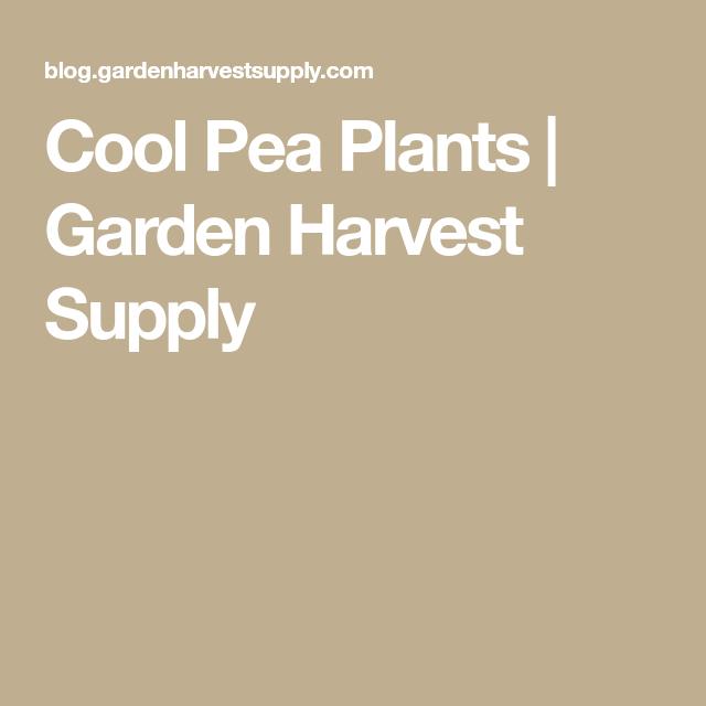 cool pea plants garden harvest supply - Garden Harvest Supply