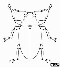 Image Result For Anatomical Drawings Beetles · Animal Coloring PagesColoring  ...