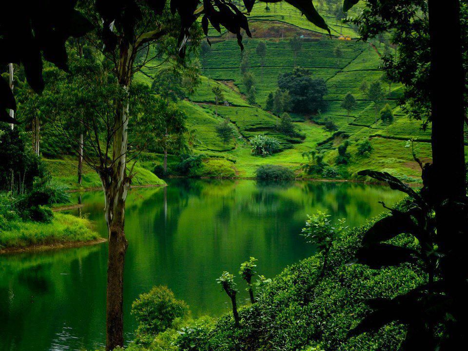 Green Hills In Sri Lanka Beautiful Places Best Places In The World Shut Up And Take Me There