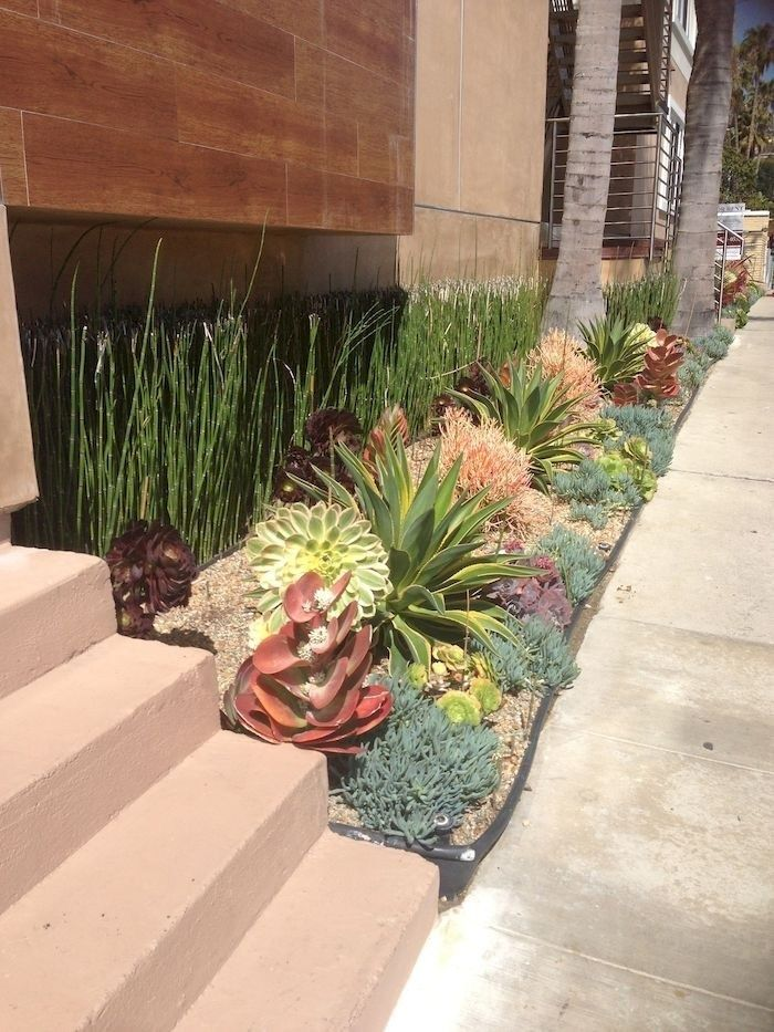 Photo of Tips for Planting a Succulent Garden