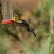 How to Make a Moat to Keep Ants Out of Hummingbird Feeders   eHow
