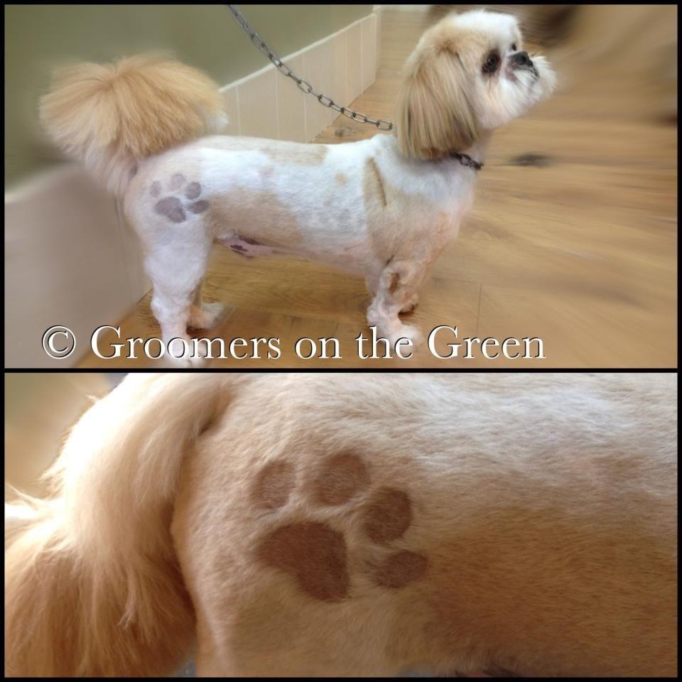 Popular Paw Print Pooch Patch Dog Grooming Dog Grooming Styles Pet Grooming