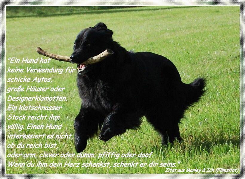 Neufundlander Vom Oberen Perftal Hundezitate Hund Zitat Neufundlander Hunde