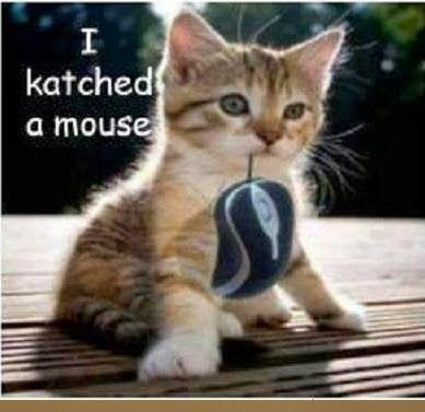 Cute Kittens Quotes. QuotesGram |Cute Kittens Quotes